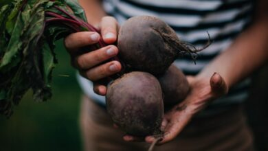 Photo of Why are Beetroots So Healthy for Men?