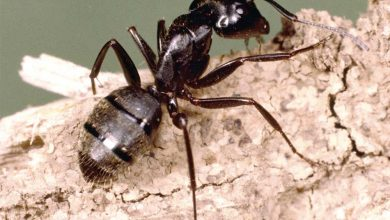 Photo of Do Ants Sleep? What Scientists Thought