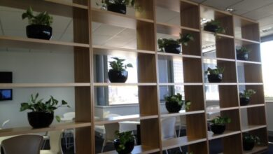 Photo of What Is The Specialization To Follow For Corporate Office Plants