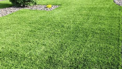 Photo of Simple Guide For Choosing The Best Fake Turf Melbourne