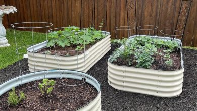 Photo of Pros and Cons of Metal Raised Beds Garden Beds