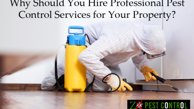 Photo of Why Should You Hire Professional Pest Control Services for Your Property?