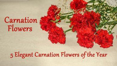 Photo of 5 Elegant Carnation Flowers of the Year