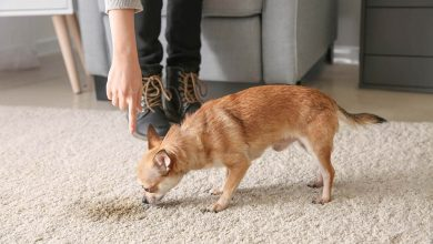 Photo of Ways To Remove Pet Stains From Carpets