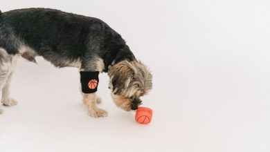 Photo of Why You Should Buy Pet Toys Online In USA