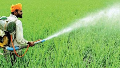 Photo of Chemical fertilization's harmful impact on agriculture