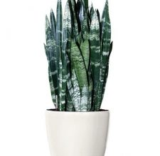 Photo of What Are The Various Plant Pots Melbourne Available In The Market